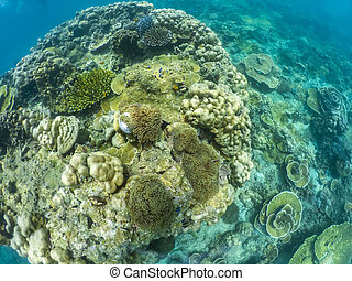 under water of natural sea coral in tropical island