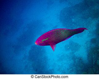 under water world at Maldives