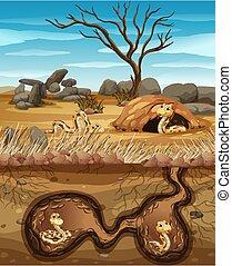 Underground animal hole with many snakes