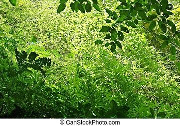 Dense undergrowth in a western Thai forest