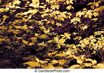 Undergrowth - Photo of some undergrowth in the forest