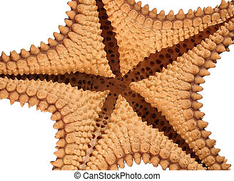 Underneath a Starfis - The bottom of a starfish isolated on...