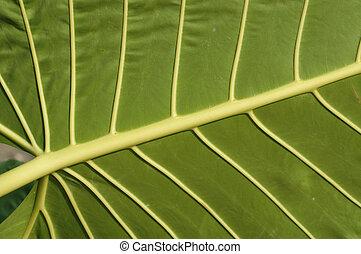 Underneath of a Gigantic Leaf
