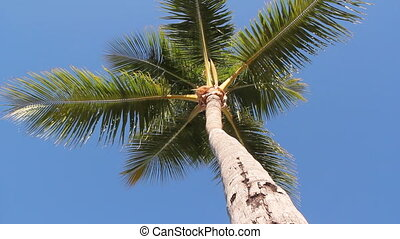Underneath palm tree.
