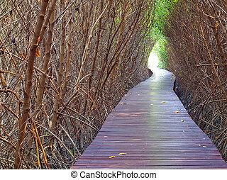 Underpass of dead trees - Boardwalk underpass of dead trees ...