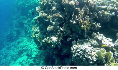 Undersea world. Beautiful view of corals, close-up