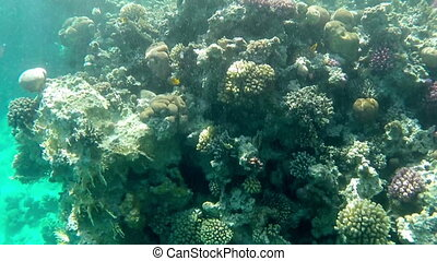 Undersea world. View of small fishes floats among corals