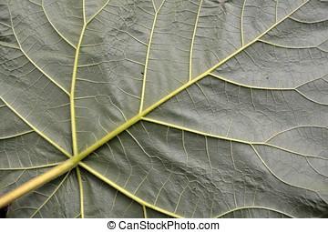 Underside of a leaf