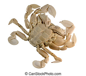 underside of a moon crab