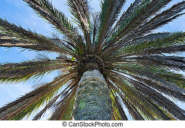 underside of palm tree - underside view of palm tree with...