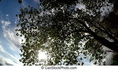 Underside view of Trees and vegetation on mountain reserve...