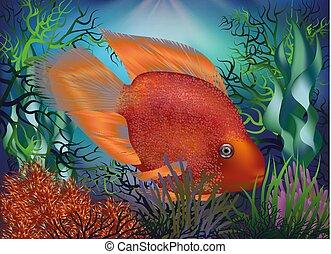 undervattens, fish, papegoja, illustration, vektor, bakgrund, röd