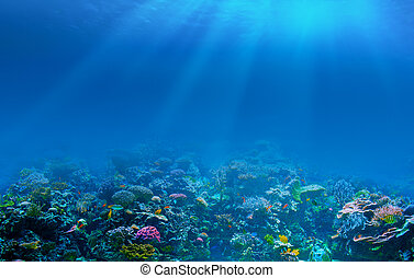 undervattens, korallrev, bakgrund