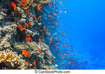 undervattens, korallrev