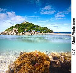 undervattens, shoot., ö, -, koraller, palm, halvt, clownfish