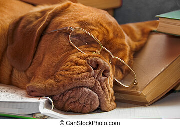 undervisning, hund