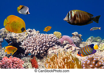 underwater życie, hard-coral, rafa