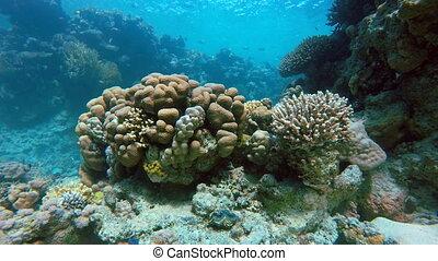Underwater adventure. Reef, Fish,