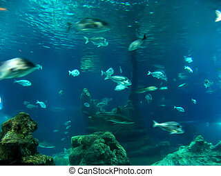 Underwater aquatic life with fishes
