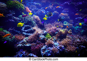 underwater background. Underwater scene. Underwater world. Underwater life landscape