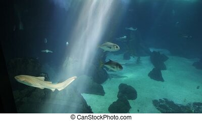 Underwater background with sunbeams