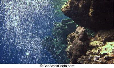 Underwater bubbles on an excellent background in Red Sea.