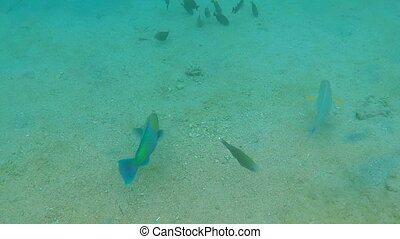 Colorful Fish on Coral Reef in Red sea