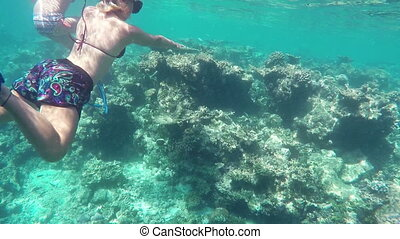 Underwater Colorful Fishes and Corals at the Beautiful...