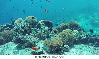 Underwater Colorful Fishes and Corals in the Beautiful...