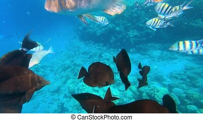 Underwater colorful tropical fishes at coral reef