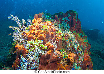 Underwater coral, fish, and plants in Bali - Underwater...