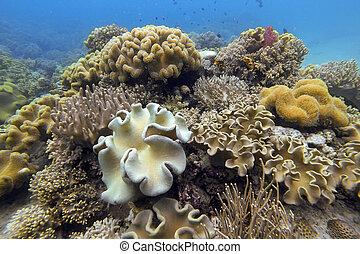 Underwater coral garden