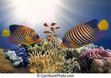 Underwater coral reef background. Red Sea