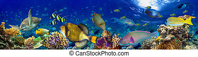 underwater coral reef landscape panorama background