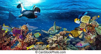 underwater coral reef landscape snorkling - young men...