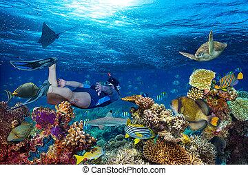 underwater coral reef landscape snorkling - young men ...