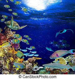 underwater coral reef landscape square quadratic background
