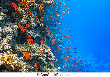 Underwater coral reef - Beautiful coral reef with fish in...