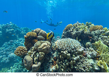 Underwater coral reef with cameraman