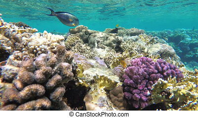 Underwater Coral Reef with Colorful Tropical Fish in Red...