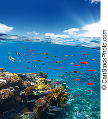 Underwater coral reef with horizon and water surface split by waterline