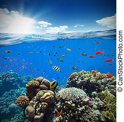 Underwater coral reef with horizon and water waves -...