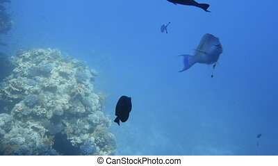 Underwater coral reef with tropical fish