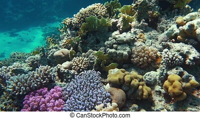 Underwater coral reef with tropical fish - Underwater...