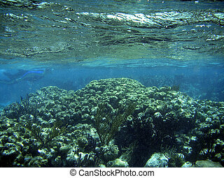 Underwater Coral Reef with Water Surface