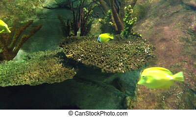 Underwater Coral scene on a reef with colorful fishes and...