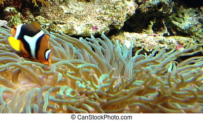 Underwater Coral scene on a reef wi