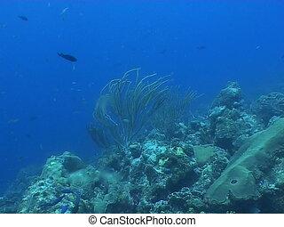 underwater diving video