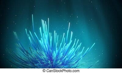 Underwater feather star loop