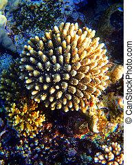 underwater flower        - nice underwater flower